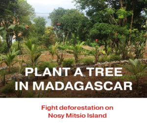 Plant a tree in Madagascar with your Peer Review Credits