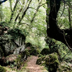forest bathing toscana italia