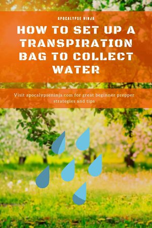 HOW TO SET UP A TRANSPIRATION BAG TO COLLECT WATER