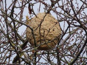 Habitants des Sables d'Olonne, comment se débarrasser d'un nid de guêpes