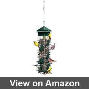audubon squirrel proof bird feeders
