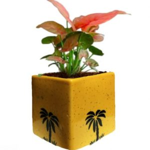 Air Purifying Plants Syngonium Mini Indoor Plant in Yellow Pot