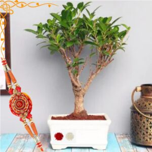 Rakhi Gifts Ficus Plant Bonsai