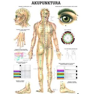Tablica anatomiczna - Akupunktura