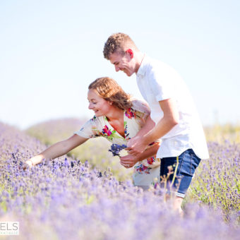 Hitchin Lavender Field Photo Shoot, Engagement Session