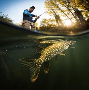 Barsch angeln im Schweriner See mit Andre Hennig