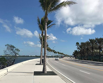 Photo Tom took of palm trees in Key West Florida