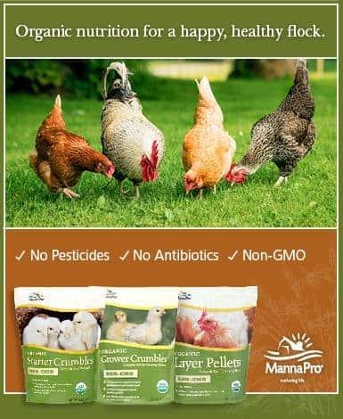 385x470 organic ad_frugal_chicken