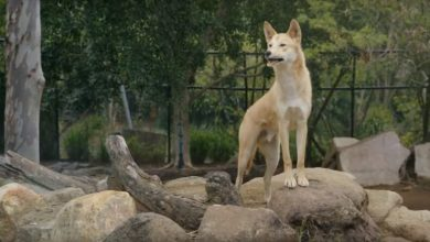Photo of Who's who at the zoo? The animals have their say