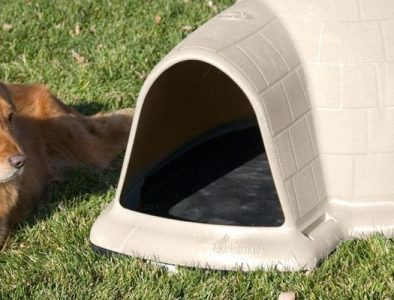 best igloo dog house
