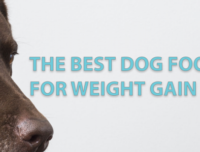 The best doog food for weight gain
