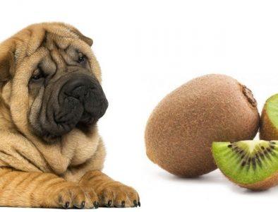 Dogs eat kiwi