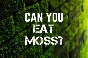 Can you eat moss? Is moss a suitable food source?
