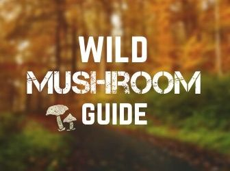 Wild mushrooms guide | Which ones to eat and which to avoid