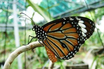 Ascoltare - Farfalla - Psicologo Milano