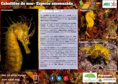 Cavalls de mar, espècie amenaçada