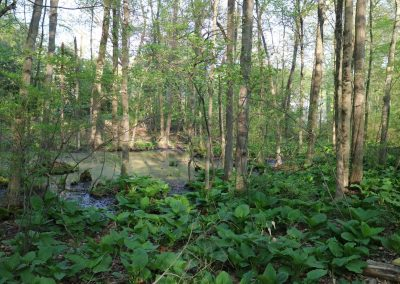Passing Wetlands and Vernal Pools