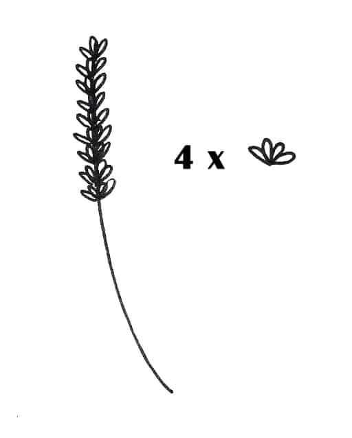 draw a lavender flower