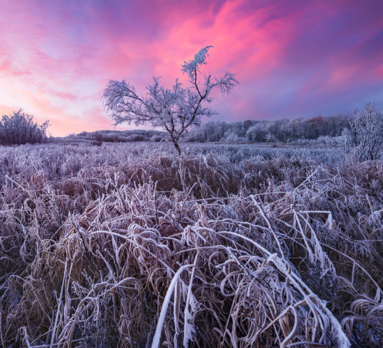 Landscape Photography in Saskatchewan at White Butte Trails. A lone tree covered in frost.