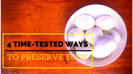 4 Time Tested Techniques To Preserve Eggs (And Some 19th Century Methods!)