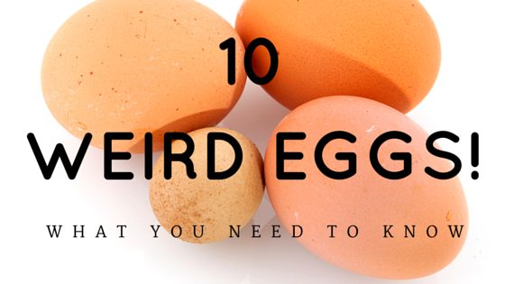 10 Abnormal Chicken Eggs & What You Need To Know!