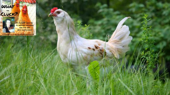 Discover Your Perfect Backyard Chicken Flock With 5 Of The Best Egg Layers [Podcast]