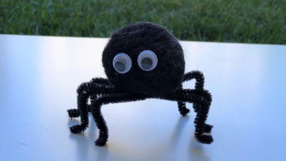 pom pom spider