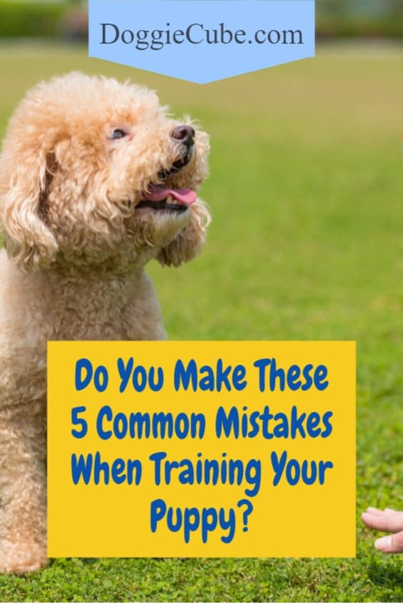 Do You Make These 5 Common Mistakes When Training Your Puppy?