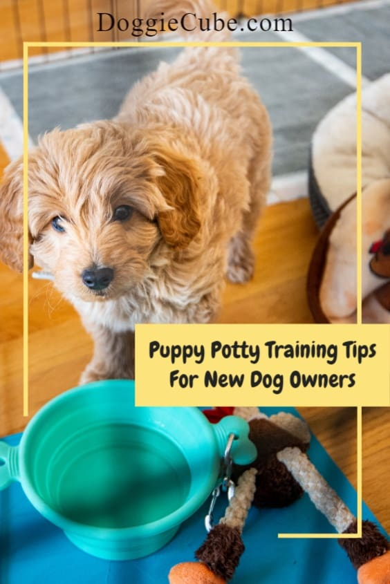 Puppy Potty Training Tips - How to Potty Train Your Puppy Effectively
