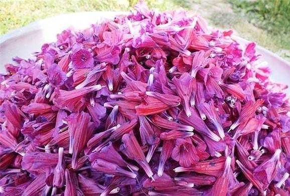طرز تهیه دمنوش گل گاو زبان و سنبل الطیب