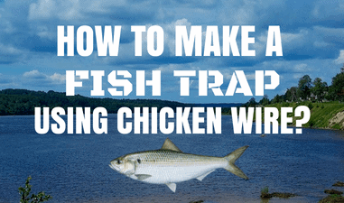 how to make a fish trap using chicken wire