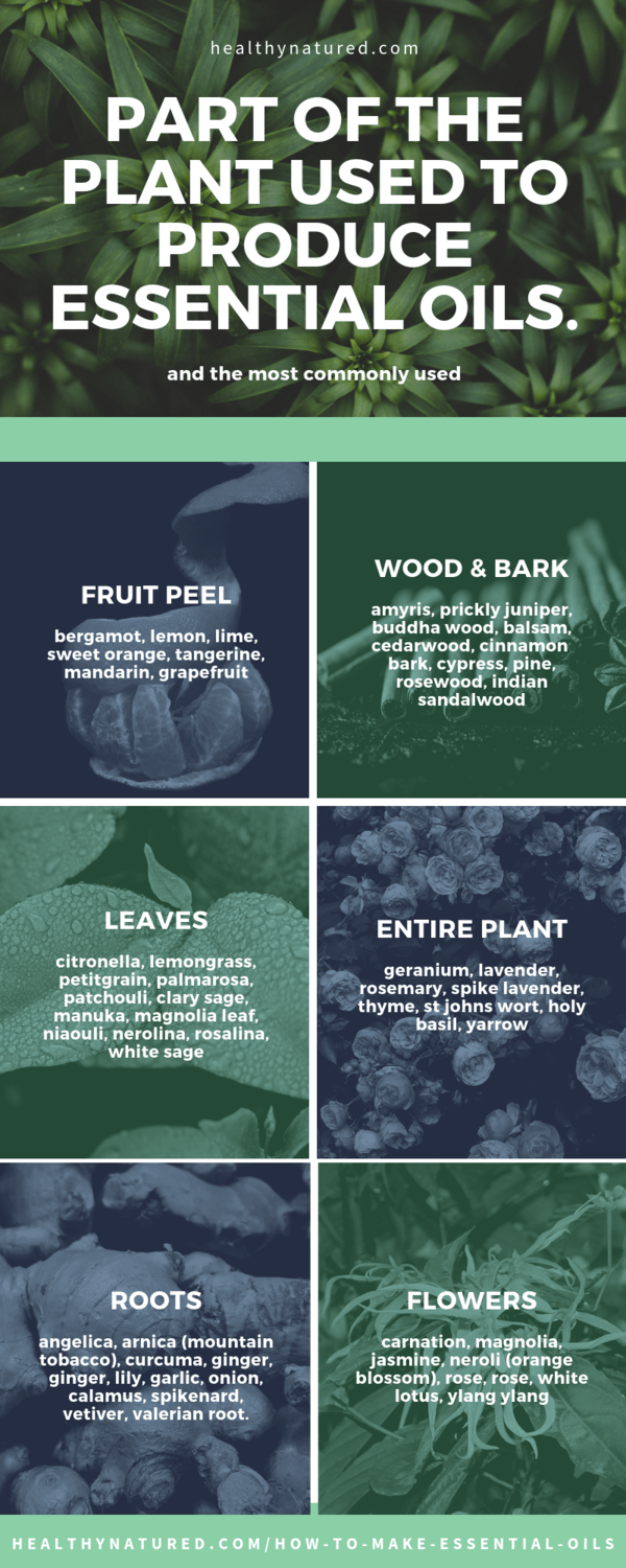 parts of the plant used - how to make essential oils