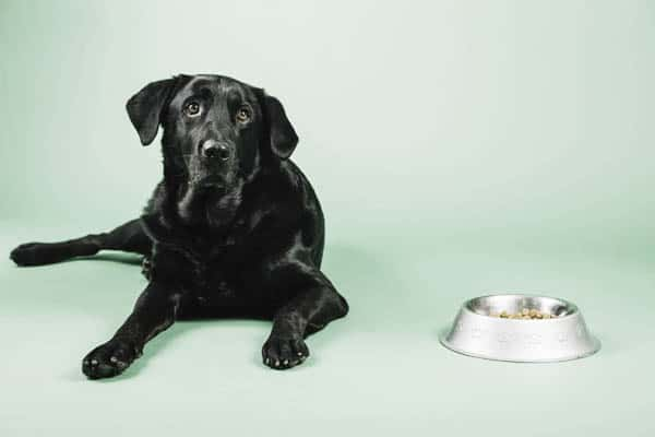 how much should i feed my dog
