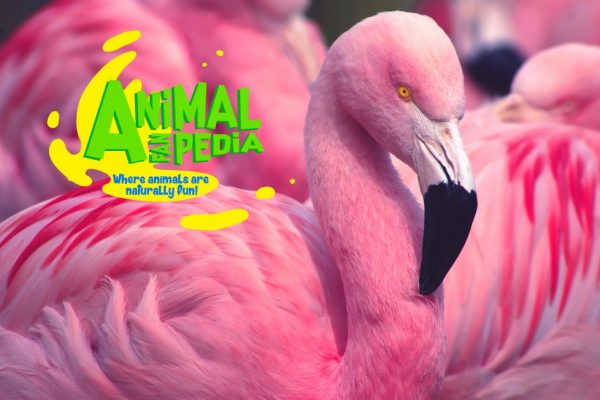 AnimalFanPedia poster no text HR 17x11