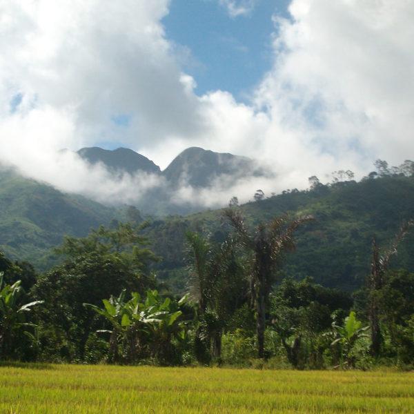 Madagascar - Foresta Umida