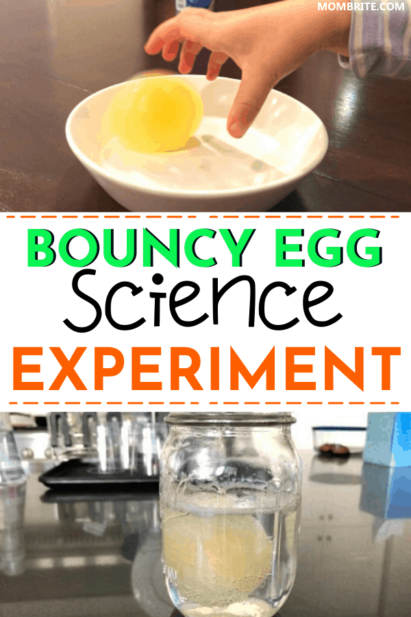 bouncy egg science experiment 1