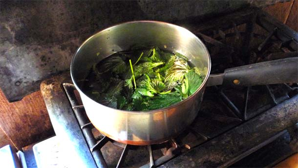 cooking nettles