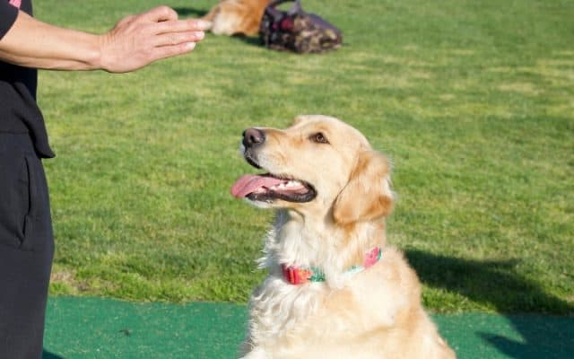 Teaching dog commands