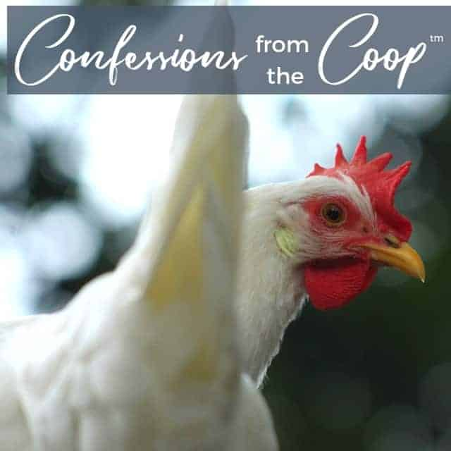 Our YouTube Channel Is Launching!: Confessions From The Coop (TM)