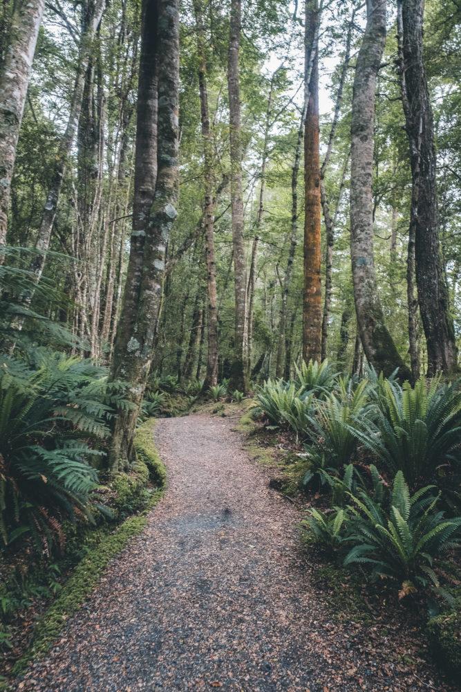Waldweg auf dem Kepler Track in Neuseeland