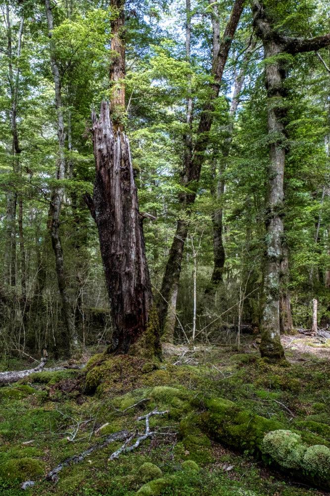 Abgebrochene Baum
