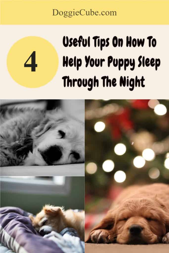 4 Useful Tips On How To Help Your Puppy Sleep Through The Night