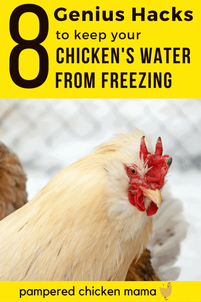Keep your chickens water from freezing this winter with these genius hacks!