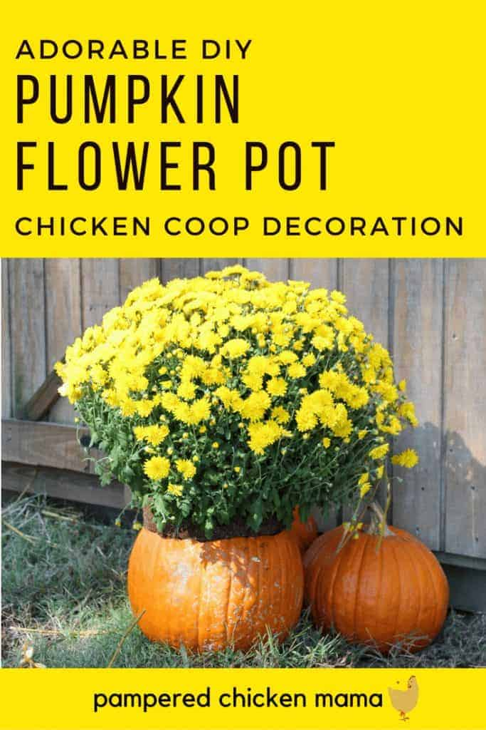 Looking for a cute fall decoration for your chicken coop? Make a vase out of pumpkins! (Hint: It's also super nutritious for your hens!)