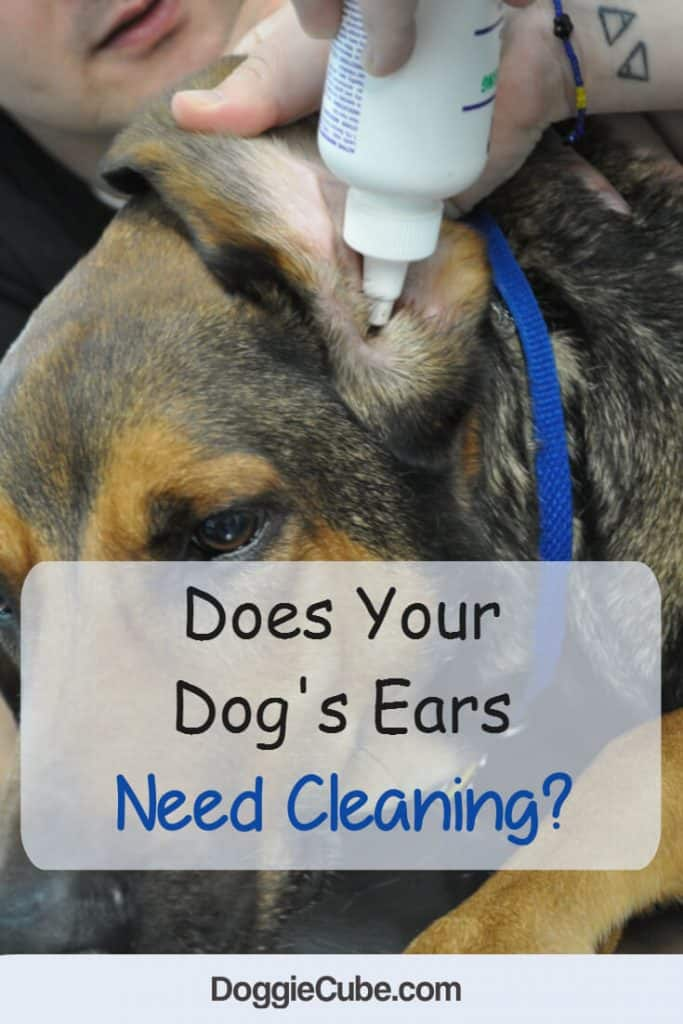 Does your dog's ears need cleaning?
