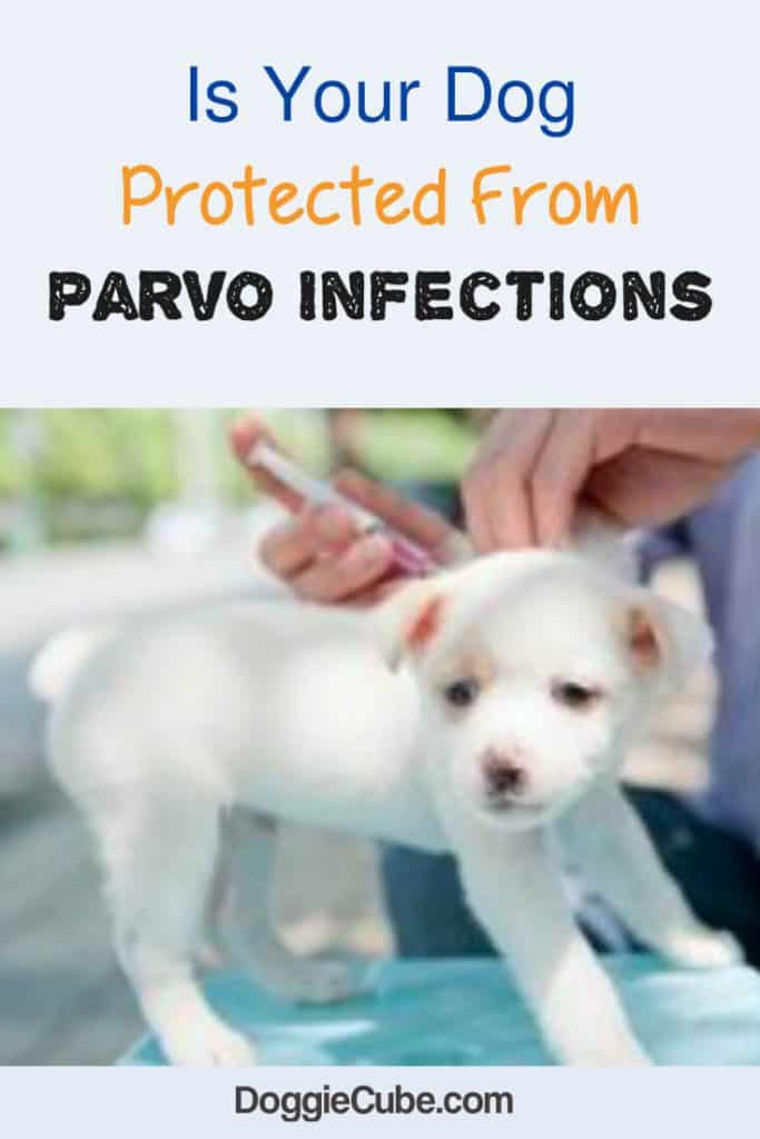 Is your dog protected from parvo infections.