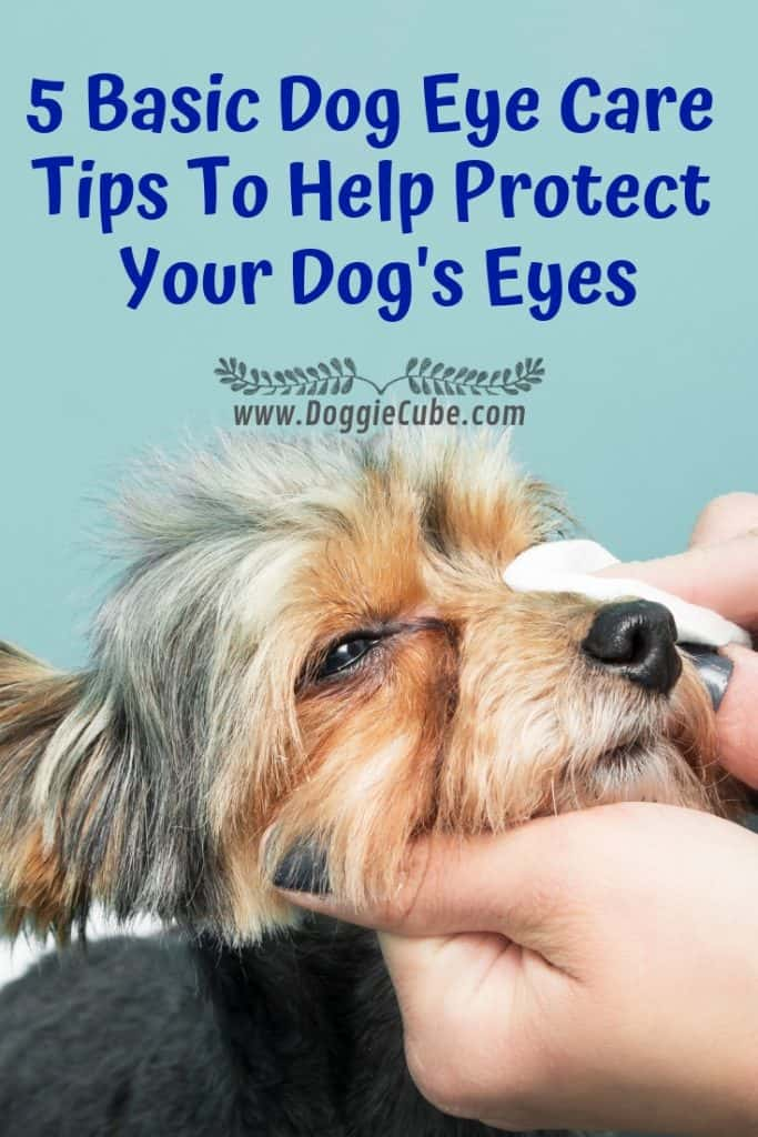 5 basic dog eye care tips to help protect your pet's eyes.