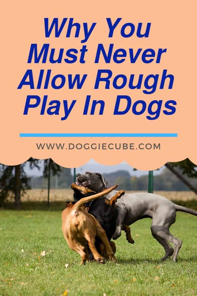 Why you must never allow rough play in dogs