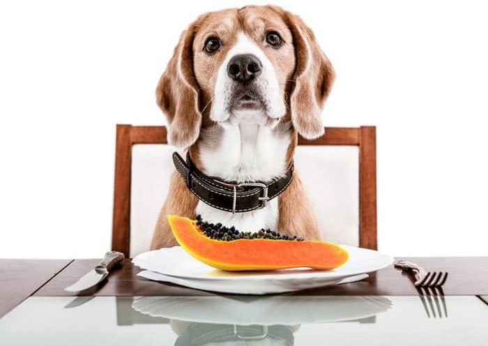 can dogs eat papaya?
