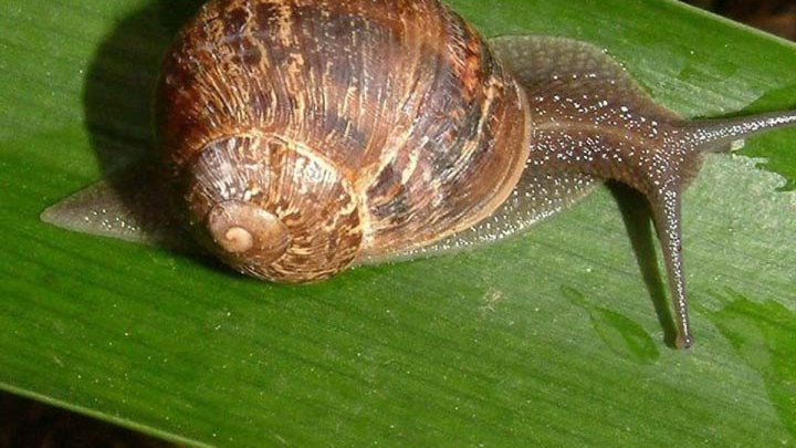 The Garden Fixer | How to control snail bites